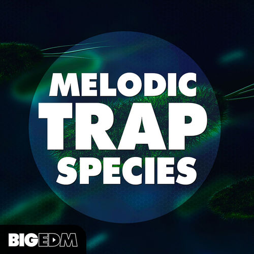 1443 800x800big edm   melodic trap species artwork