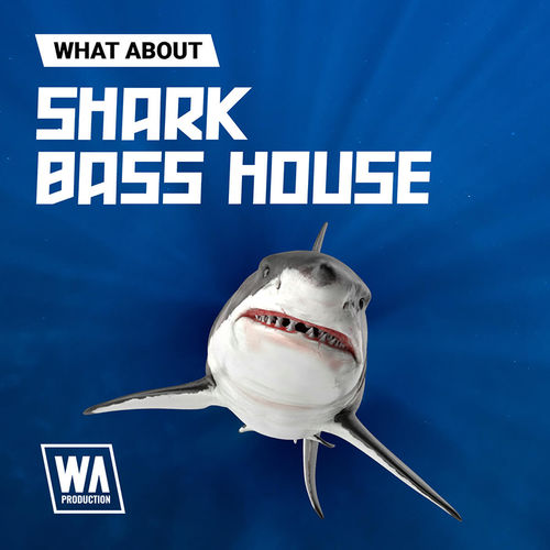 1839 800x800w. a. production   what about shark bass house artwork