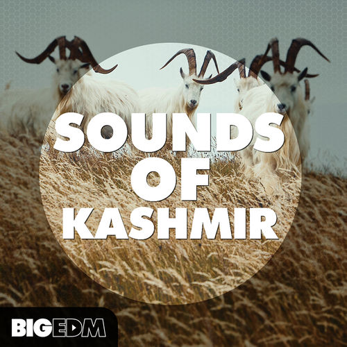 359 800x800soundsofkashmircover