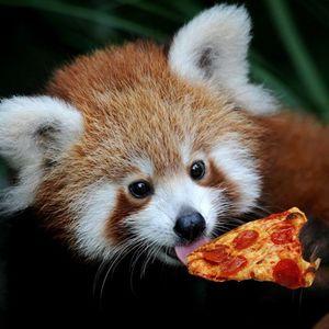 Red panda pizza